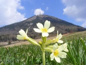 Monte Bondone con fiore