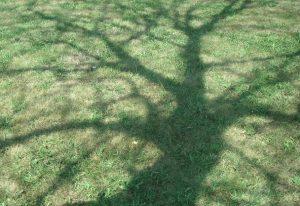 mio-albero