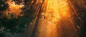 albero-luce
